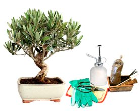 Comprar Bonsai Packs Regalo