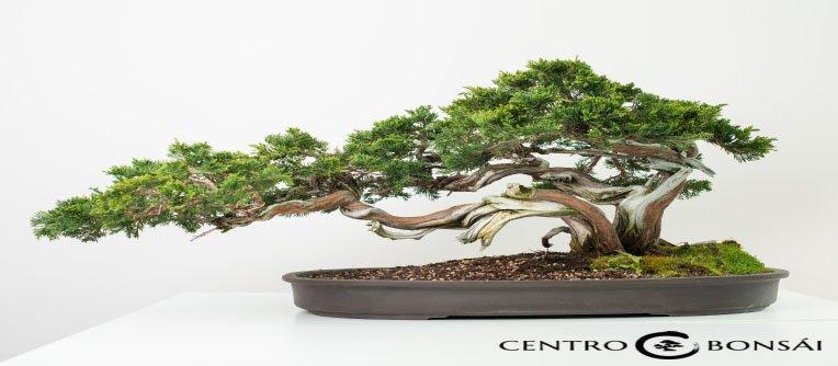 Bonsai China