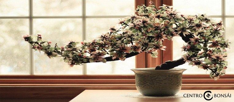 Ideal Bonsai