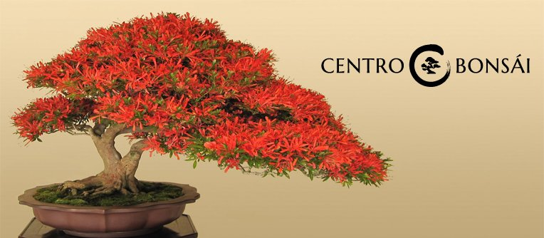 como conseguir un bonsai