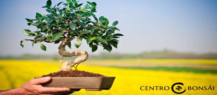 Plantas Bonsais