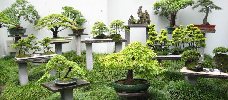 tienda de bonsáis en Madrid