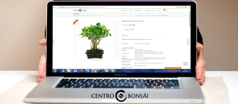 ver bonsai online