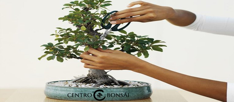 Bonsai Planta Como Cuidar
