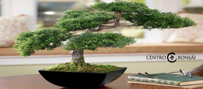 comprar bonsai artificial archivos centrobonsai comprar