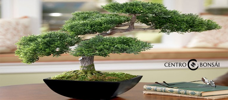 Comprar Bonsai Artificial