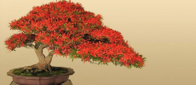 comprar bonsais baratos en madrid