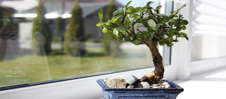 comprar bonsais de interior