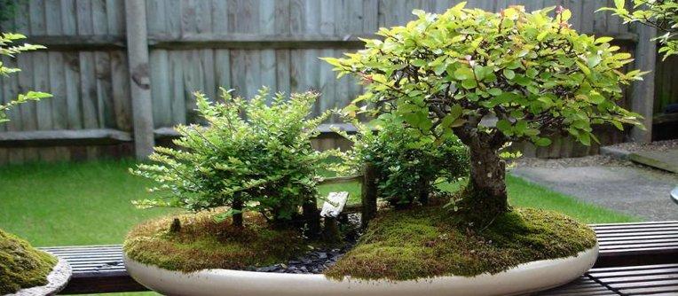 comprar bonsais japon