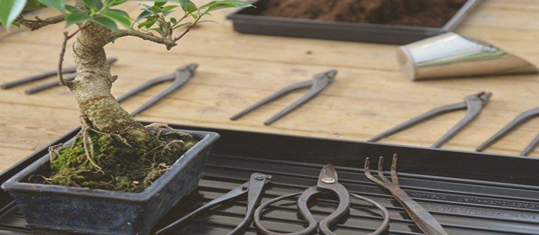 comprar herramientas bonsais