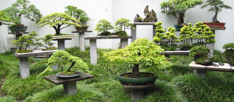 venta de bonsais en madrid