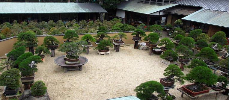 venta de bonsais en sevilla