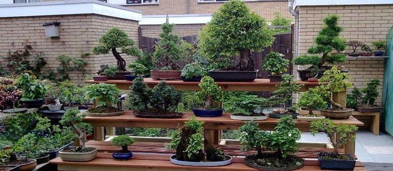 venta de bonsais online