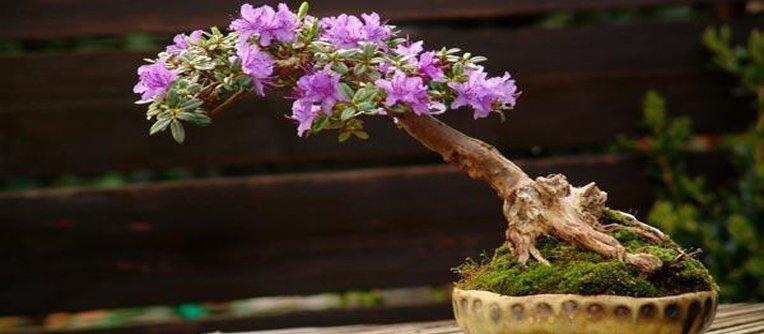 Comprar bonsai Girona