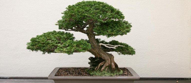 Comprar bonsáis Bilbao