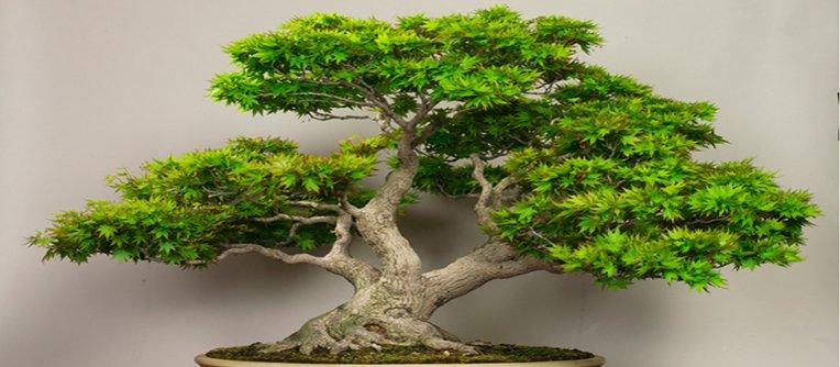 Comprar bonsáis Malaga