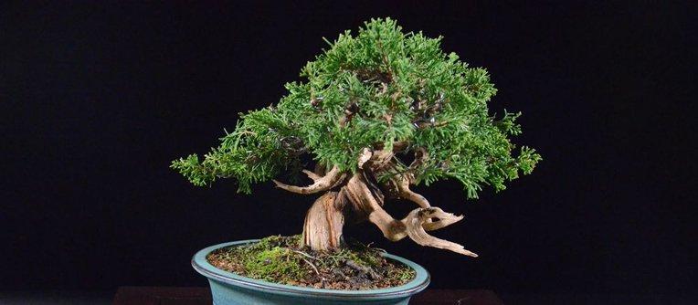 comprar un bonsái en sevilla