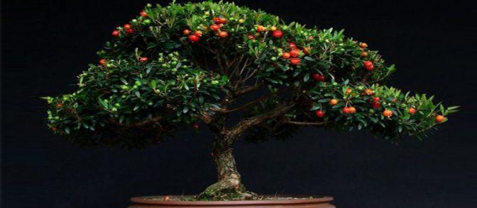 bonsai sevilla