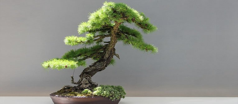 bonsai significado
