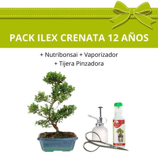 PACK-Bonsai-Ilex-Crenata-12-anos