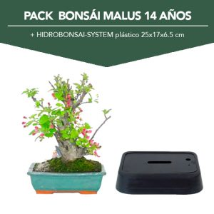 PACK Bonsai Malus 14 01