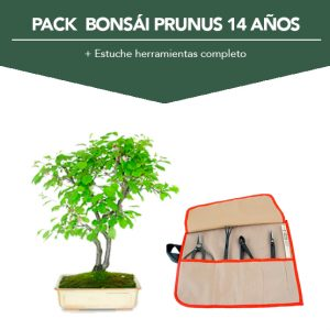 PACK Bonsai Prunus 14 01