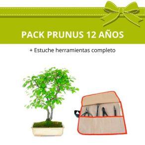 PACK-Bonsai-Prunus-14-anos-estuche-herramientas-completo