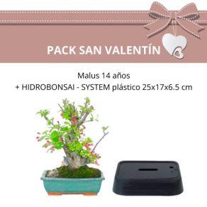Pack-Bonsai-Malus-14-anos