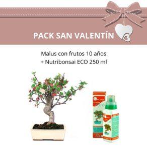 Pack-Bonsai-Malus-(Manzano)-con-fruto-10-anos