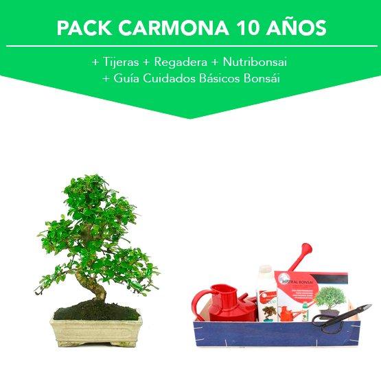 Pack Bonsái Carmona Microphylla 10 años