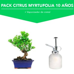 Pack Bonsái Citrus Myrtufolia 10 años
