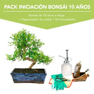 Pack Iniciacion Bonsai 10