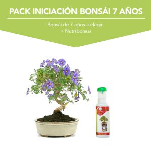 Pack Iniciacion Bonsai 7