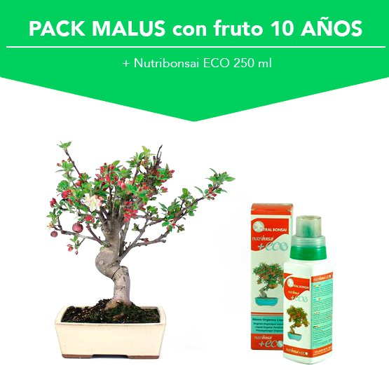 Pack Bonsái Malus (Manzano) con fruto 10 años