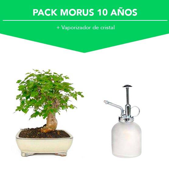 Pack Bonsái Morus 10 años