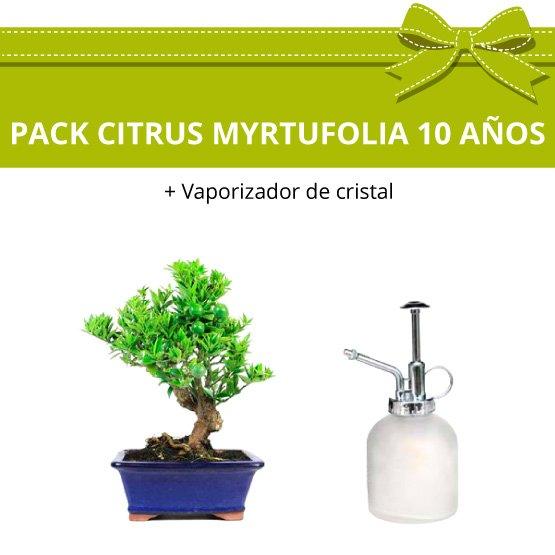 Pack-bonsai-CITRUS-MYRTUFOLIA-10-anos