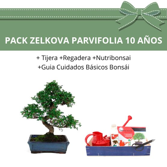Pack-bonsai-Zelkova-Parvifolia-10-anos
