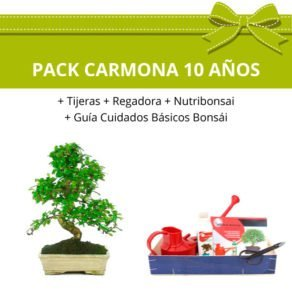 Pack-bonsai-carmona-microphylla-10-anos