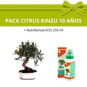 Pack Bonsái Citrus Kinzu (Mandarino) con fruto 10 años