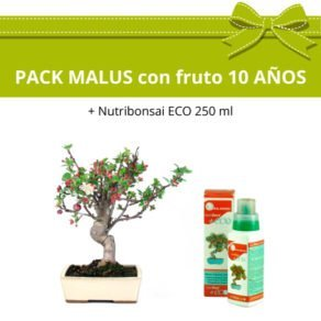 Pack-bonsai-malus-manzano-fruto-10-anos