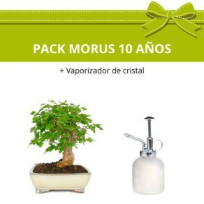 Pack-bonsai-morus-10-anos