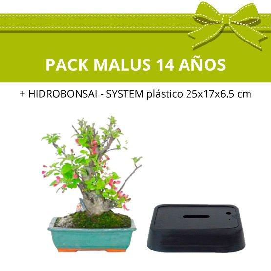 pack-bonsai-Malus-14-anos-hidrobonsai
