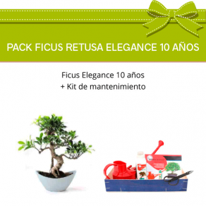 Pack Bonsái Ficus Elegance 10 años