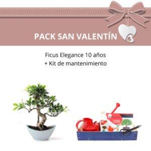Pack-Bonsai-Ficus-Elegance-10-anos