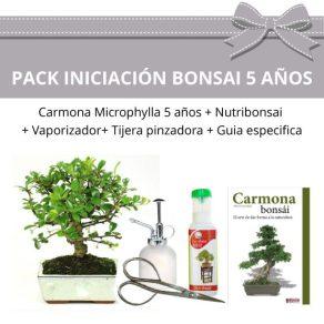 Pack Bonsái Carmona Microphylla 5 años