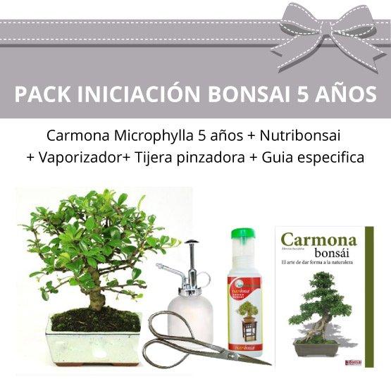 Pack-Iniciacion-Bonsai-Carmona-Mycrophylla-5-anos