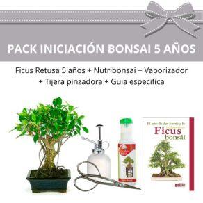Pack Bonsái Ficus Retusa 5 años