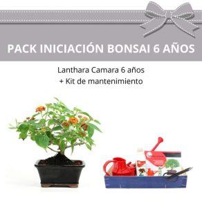 Pack-Iniciacion-Bonsai-Lanthara-camara-6-anos
