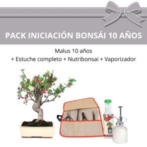 Pack-Iniciacion-Bonsai-Malus-10-anos