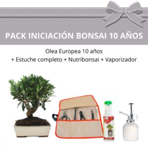Pack Iniciacion Bonsai Olea Europea 10 anos